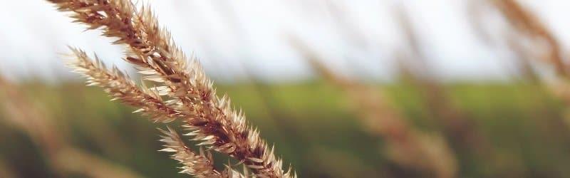 מחיר קרקע חקלאית - תקן שמאי 22