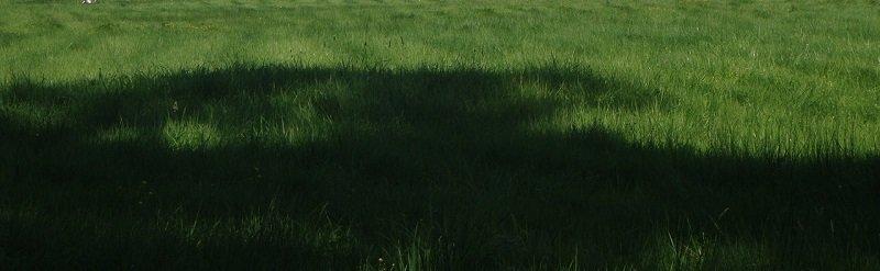 קרקע למכירה מכונס נכסים - דשא ירוק