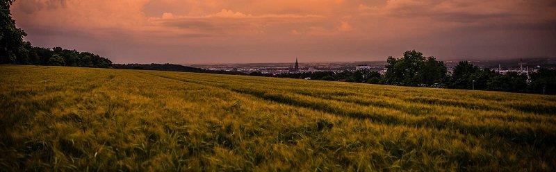 קרקע חקלאית להשקעה - קרקעות חקלאיות